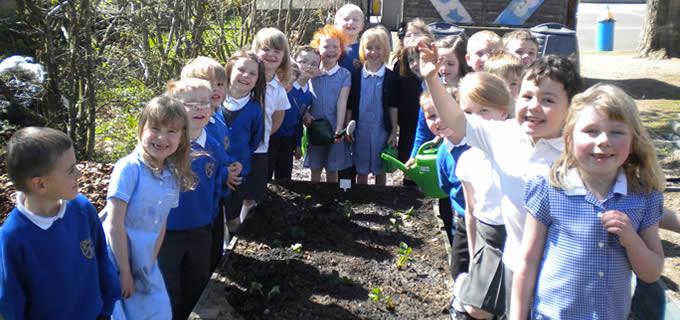 P1G Strawberry planting
